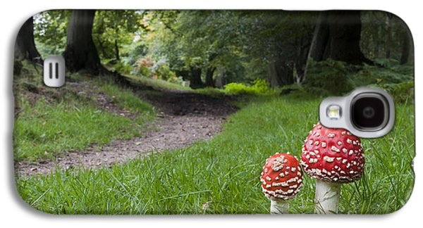 Toadstools Galaxy S4 Cases - Fly Agaric Mushrooms Galaxy S4 Case by Tim Gainey
