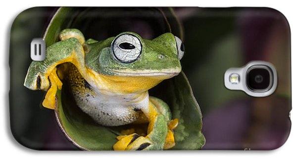 Flying Frog Galaxy S4 Cases - Flying Tree Frog Galaxy S4 Case by Linda D Lester