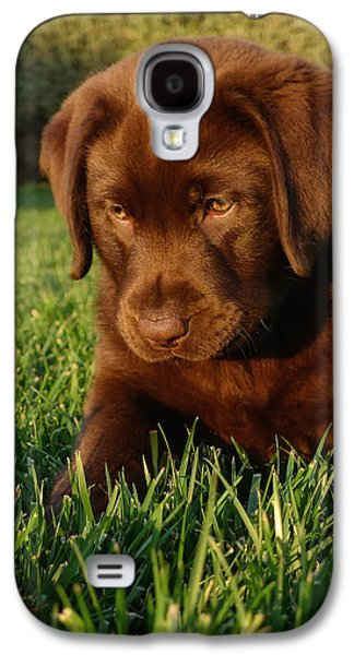 Puppies Galaxy S4 Cases - Focus Galaxy S4 Case by Larry Marshall
