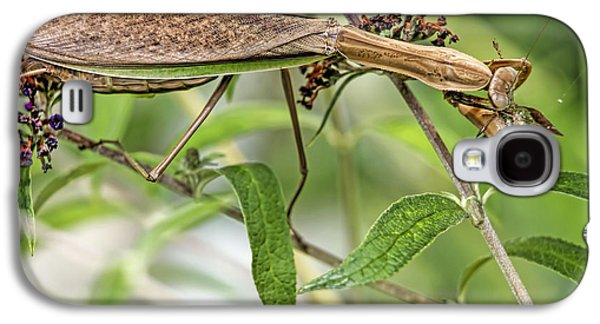 Butterfly Prey Galaxy S4 Cases - Food Chain Preying Mantis Eating Hummingbird Moth  Galaxy S4 Case by Geraldine Scull