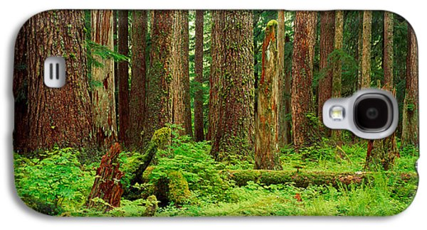 Forest Floor Galaxy S4 Cases - Forest Floor Olympic National Park Wa Galaxy S4 Case by Panoramic Images