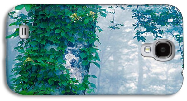 Green Foliage Galaxy S4 Cases - Forest Nagano Kijimadaira-mura Japan Galaxy S4 Case by Panoramic Images