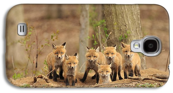 Red Fox Galaxy S4 Cases - Fox Family Portrait Galaxy S4 Case by Everet Regal
