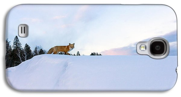 Mary Amerman Galaxy S4 Cases - Fox of the North III Galaxy S4 Case by Mary Amerman