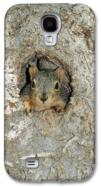 Fox Squirrel Galaxy S4 Cases - Fox Squirrel Galaxy S4 Case by Gregory G. Dimijian