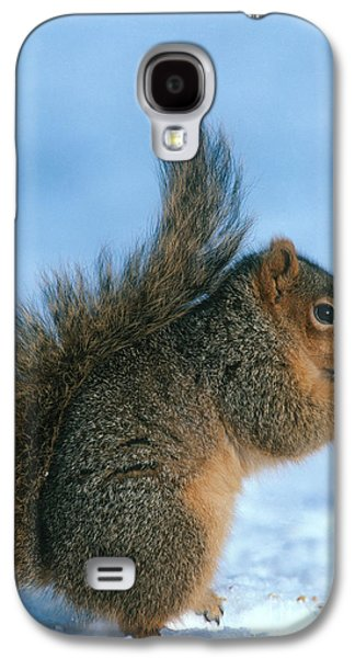 Fox Squirrel Galaxy S4 Cases - Fox Squirrel Galaxy S4 Case by William H. Mullins