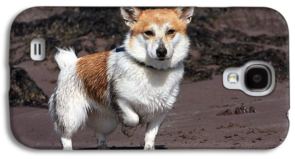 Dog In Landscape Galaxy S4 Cases - Parson Russell Terrier At The Beach Galaxy S4 Case by Aidan Moran