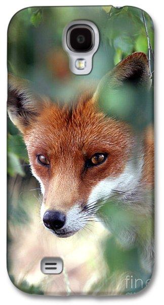 Red Fox Galaxy S4 Cases - Fox through trees Galaxy S4 Case by Tim Gainey