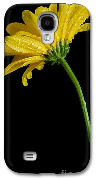 Bloosom Galaxy S4 Cases - Fresh As Can Be Galaxy S4 Case by Nick  Boren