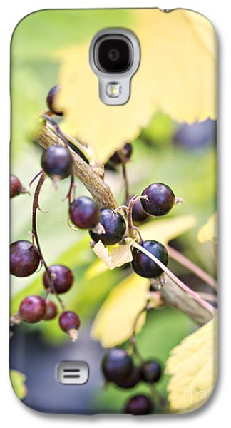 Wild Orchards Galaxy S4 Cases - Fresh organic blackcurrents Galaxy S4 Case by Sophie McAulay