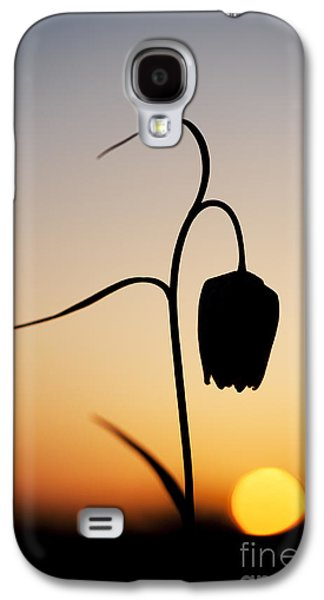Meleagris Galaxy S4 Cases - Fritillary Sunset Galaxy S4 Case by Tim Gainey