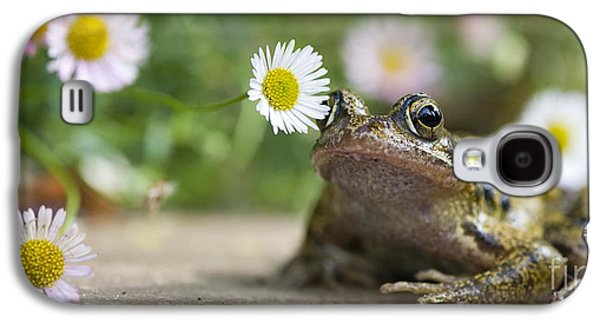 Frogs Photographs Galaxy S4 Cases - Frog and the Daisy  Galaxy S4 Case by Tim Gainey
