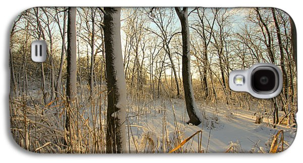 Indiana Winters Galaxy S4 Cases - Frozen Swamp at Golden Hour Galaxy S4 Case by Jackie Novak