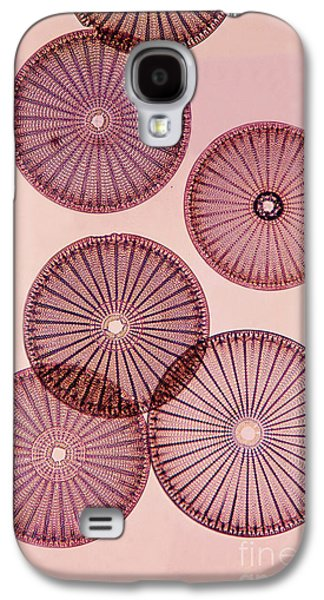 Frustule Galaxy S4 Cases - Frustules Of Diatoms Galaxy S4 Case by De Agostini Picture Library