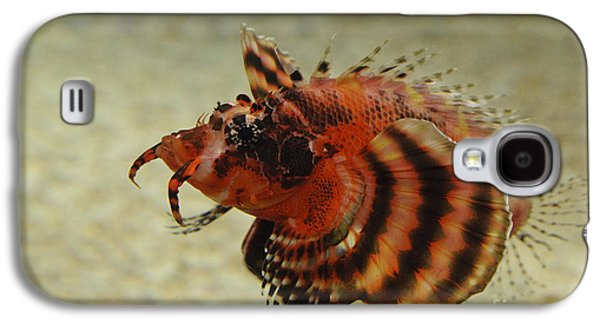 Underwater Photos Galaxy S4 Cases - Fu Manchu Lionfish Galaxy S4 Case by John Shaw
