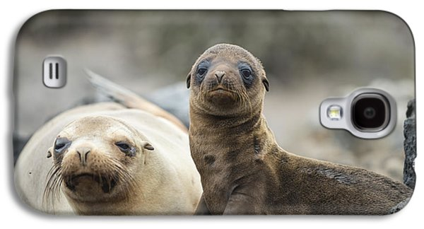 Galapagos Sea Lion And Pup Champion Galaxy S4 Case by Tui De Roy