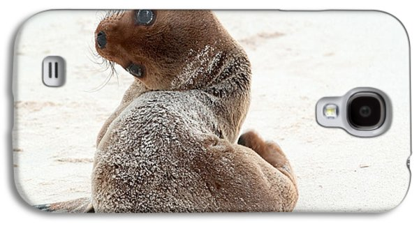 California Sea Lions Galaxy S4 Cases - Galapagos Sea Lion Pup Galaxy S4 Case by Michael Lustbader
