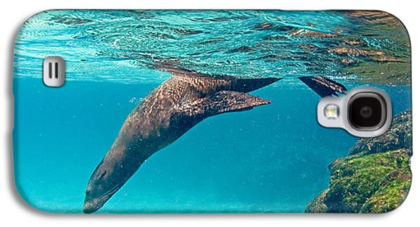 Galapagos Sea Lion Zalophus Wollebaeki Galaxy S4 Case by Panoramic Images