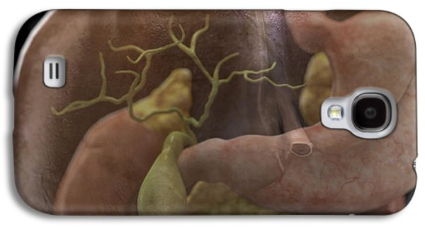 Internal Organs Galaxy S4 Cases - Gallbladder Galaxy S4 Case by Science Picture Co