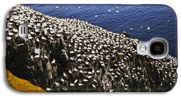 Reserve Galaxy S4 Cases - Gannets at Cape St. Marys Ecological Bird Sanctuary Galaxy S4 Case by Elena Elisseeva