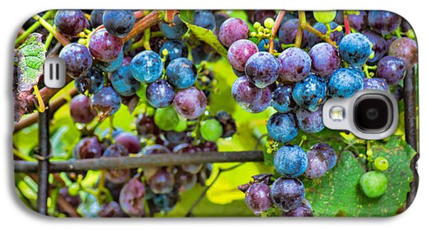 Concord Grapes Galaxy S4 Cases - Garden Grapes Galaxy S4 Case by Bill Pevlor