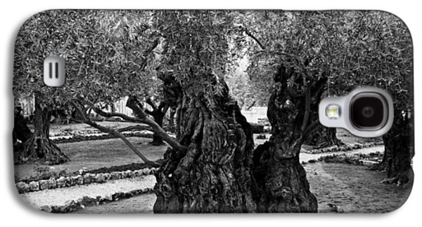 Holy Week Galaxy S4 Cases - Garden of Gethsemane Olive Tree Galaxy S4 Case by Stephen Stookey