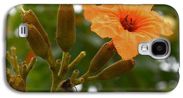 Oranger Galaxy S4 Cases - Geiger Tree - Geiger Flower Galaxy S4 Case by Greg Thiemeyer