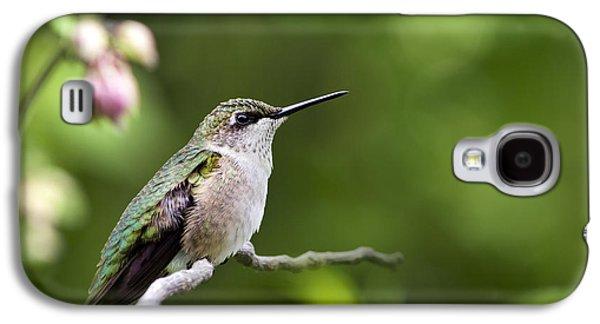 Rollo Digital Art Galaxy S4 Cases - Gentle Hummingbird Galaxy S4 Case by Christina Rollo