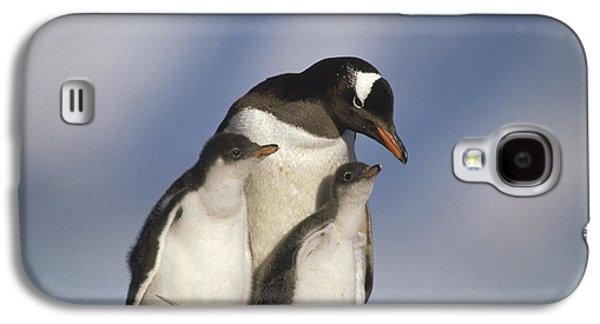 Three Chicks Galaxy S4 Cases - Gentoo Penguin With Two Chicks Galaxy S4 Case by Gerry Ellis