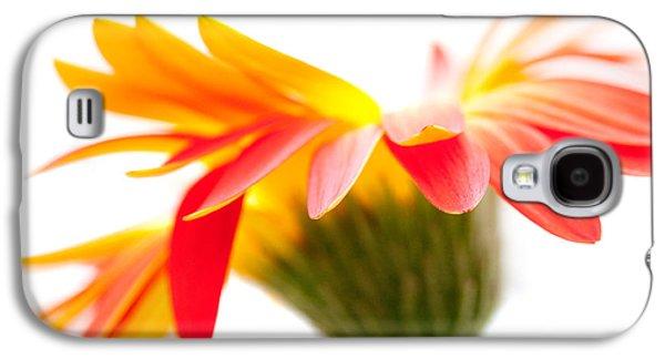 Nature Study Digital Art Galaxy S4 Cases - Gerbera Mix Crazy Flower - Orange Yellow Galaxy S4 Case by Natalie Kinnear