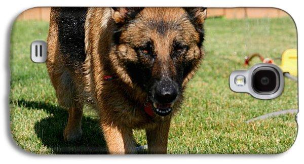 Iraq Prints Galaxy S4 Cases - German Shepherd Galaxy S4 Case by Kay Novy