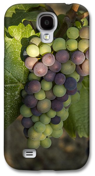 Vintner Galaxy S4 Cases - Getting Ripe Galaxy S4 Case by Jean Noren