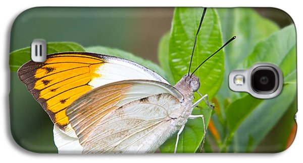 Pollinate Galaxy S4 Cases - Giant orange tip butterfly Galaxy S4 Case by Jane Rix