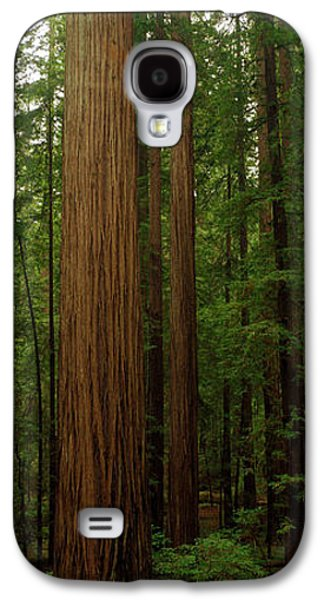 Forest Floor Galaxy S4 Cases - Giant Redwood Trees Ave Of The Giants Galaxy S4 Case by Panoramic Images