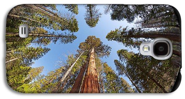 Ancient Galaxy S4 Cases - Giant Sequoia Fisheye Galaxy S4 Case by Jane Rix