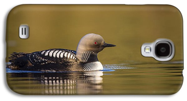 Loon Galaxy S4 Cases - Glassy Waters and a Pacific Loon Galaxy S4 Case by Tim Grams
