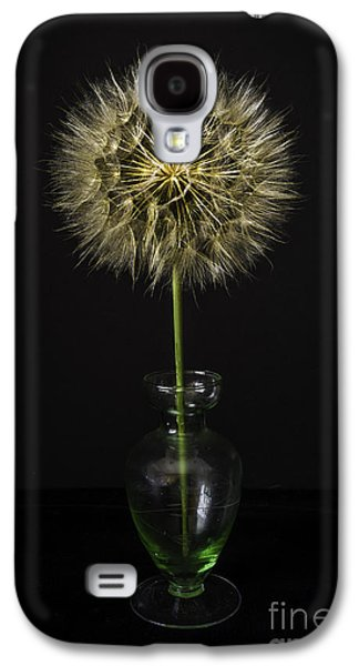 Still Life Glass Art Galaxy S4 Cases - Goats Beard In Vase Galaxy S4 Case by Mitch Shindelbower