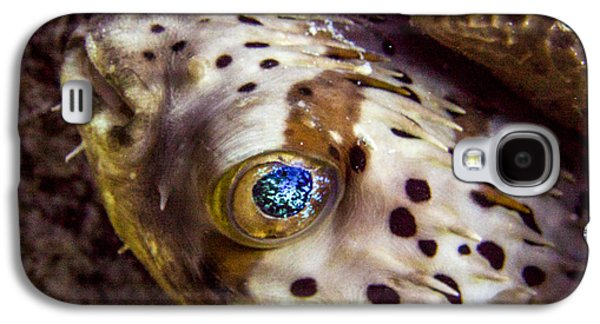 Porcupine Fish Galaxy S4 Cases - Goggly Eye Galaxy S4 Case by Jean Noren