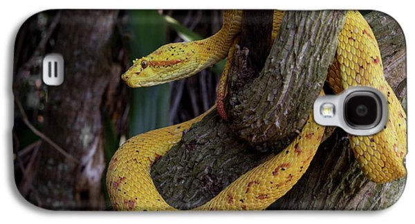 Gold Color Morph Of The Eyelash Viper Galaxy S4 Case by Thomas Wiewandt
