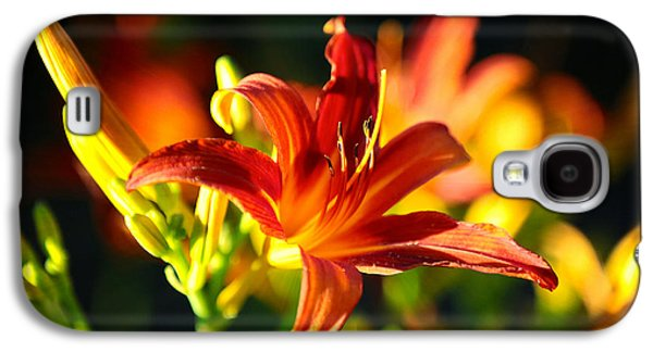 Sunlight On Flowers Galaxy S4 Cases - Golden Daylily Rays Galaxy S4 Case by Carol Groenen