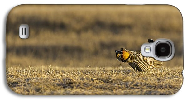 Matting Galaxy S4 Cases - Golden Light On The Prairie Galaxy S4 Case by Thomas Young