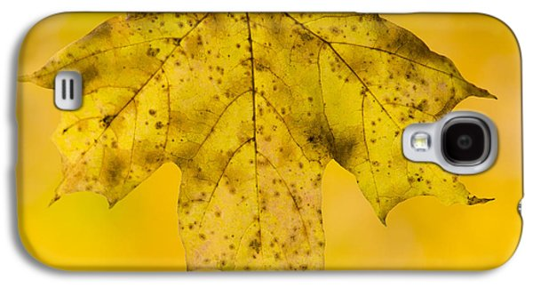 Autumn Foliage Galaxy S4 Cases - Golden Maple Leaf Galaxy S4 Case by Sebastian Musial