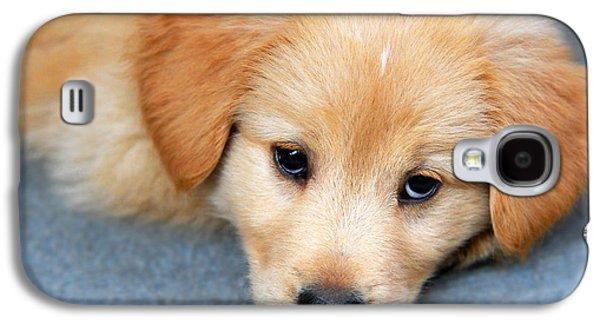 House Pet Galaxy S4 Cases - Retriever Puppy Galaxy S4 Case by Christina Rollo