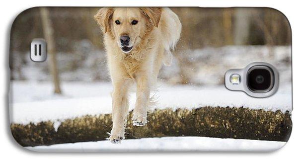 Dog Running. Galaxy S4 Cases - Golden Retriever Jumping Galaxy S4 Case by John Daniels