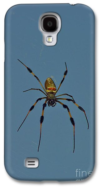 Golden Silk Orbweaver Galaxy S4 Case by Lynda Dawson-Youngclaus