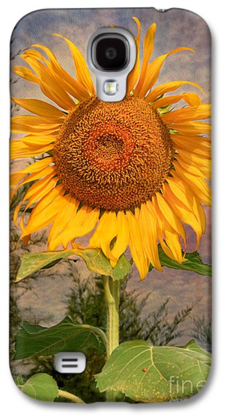 Stamen Digital Galaxy S4 Cases - Golden Sunflower Galaxy S4 Case by Adrian Evans