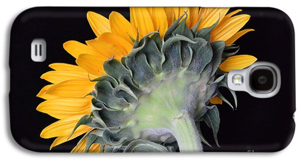 Sun Galaxy S4 Cases - Golden Sunflower No 2 Galaxy S4 Case by Jeannie Rhode Photography