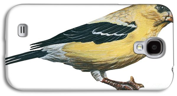 Goldfinch  Galaxy S4 Case by Anonymous