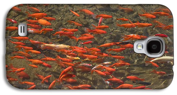 Schools Of Fish Galaxy S4 Cases - Goldfish Carassius Auratus Swimming Galaxy S4 Case by Panoramic Images