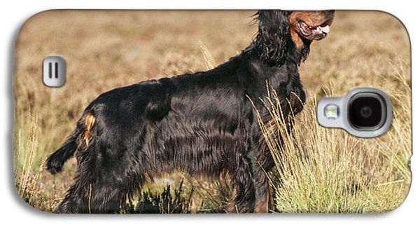 Gordon Photographs Galaxy S4 Cases - Gordon Setter Dog Galaxy S4 Case by John Daniels